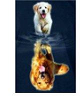 Diamond-Painting Honden 40x50 cm