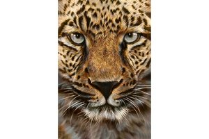 Wizardi Diamond Painting Kit Cheetah WD069