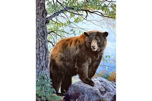 Wizardi Diamond Painting Kit BROWN BEAR WD083