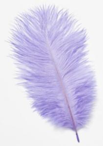 Struisveren Lavendel
