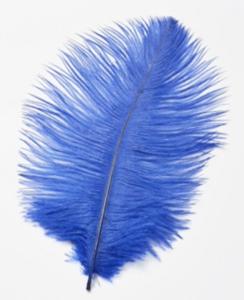 Struisveren Blauw