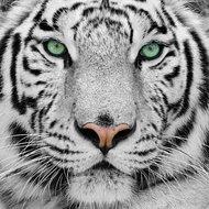 Crystal Art Kit   Diamond Painting Snow Tiger
