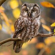 Crystal Art Kit | Diamond Painting Tawny Owl
