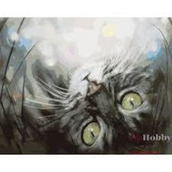 Protsvetnoy Paint by Numbers | Dreaming Kitty - ME1074E